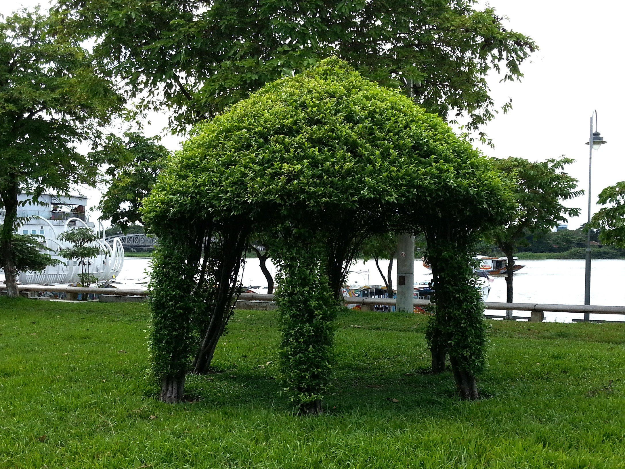 Topiary in the 3 February Park